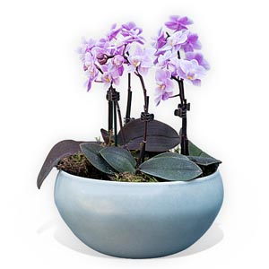 Bowl Of Orchid