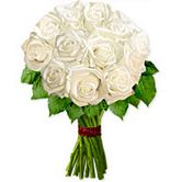 White Roses - Beauty of White