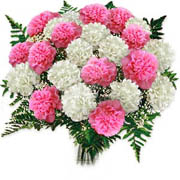 Carnation Bouquet - Carnations Favourite