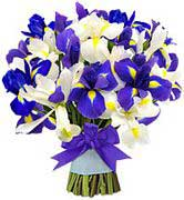 Blue and White Iris - Bright star